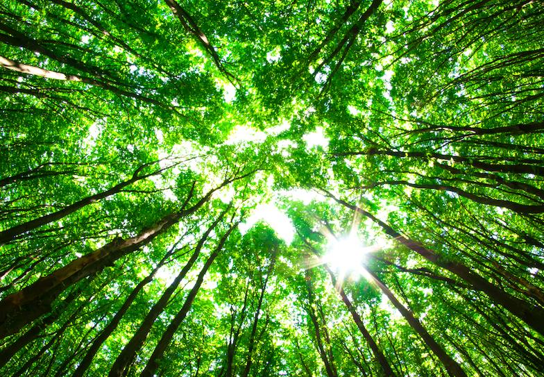 Vysadit bilion stromů nemusí být ten nejlepší nápad